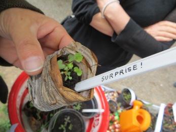 Jardins des Délices plantons