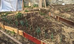 poireaux aux jardins